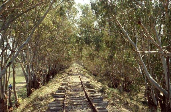 ferrovie-dismesse
